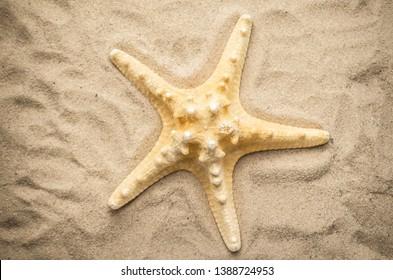 Shells on tropical beach, background