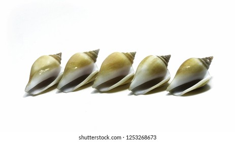 Shells on white background