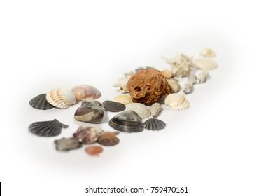 Shells on white isolated