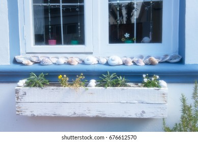 Shells on the windowsill, window and flowers