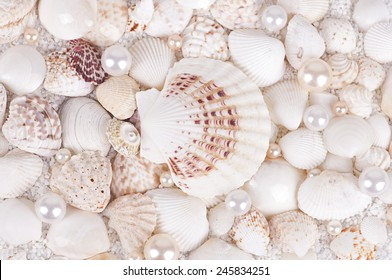 shells with pearls on a white coarse sand