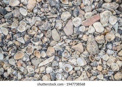 shells at the rhine river beach