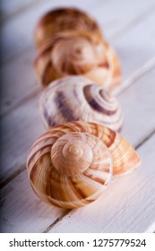 Shells in a row over white table, vertical image