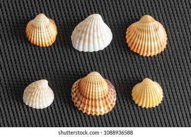Shells sea life