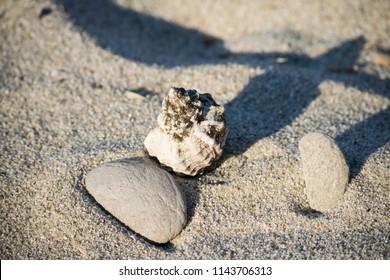 shells and sea snail on the beach
