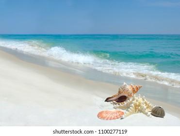 Shells, Seastar and Sea Urchin on a Beautiful White Sand Beach
