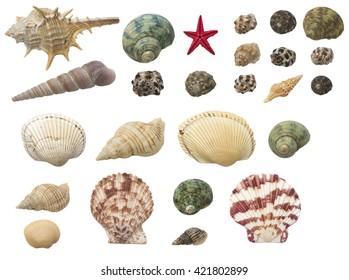 shells set isolated on white background closeup