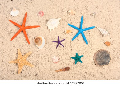 Shells and star fishes in sand at the beach