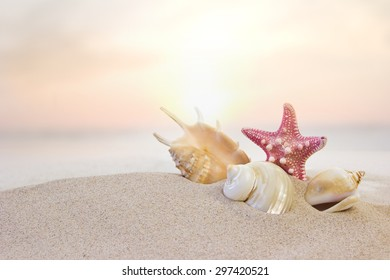 shells and starfish at the beach