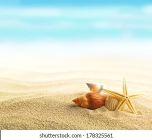Shells and starfish on sandy beach