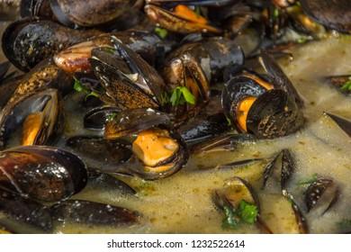 shells in wine