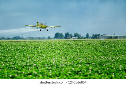 Shelly, Idaho, USA July 19, 2012 A low angle view of a crop duster spraying green farmland.