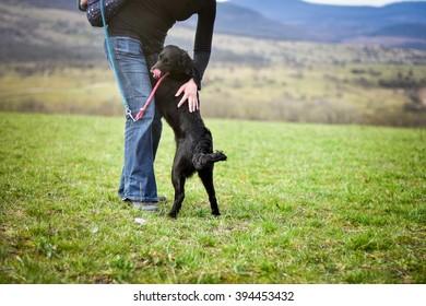 shelter dog during outdoor walking