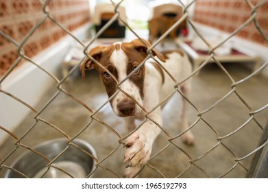 A Shelter Dog Is Reaching Through It's Fenced Enclosure With It's Paw
