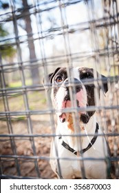 A shelter dog is waiting behind the fence.