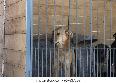 Shelter for dogs near Ivano-Frankivsk, Ukraine