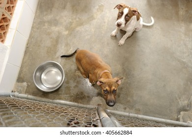 Shelter dogs is two beautiful puppies in an animal shelter looking up from the fence wondering if anyone is going to take them home today.
