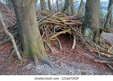 shelter in the forest, made of knobs between trees