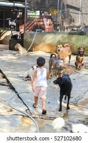 Shelter for homeless dogs