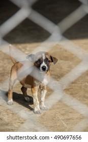 Shelter for homeless dogs, thailand