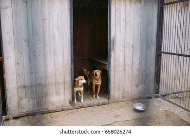 Shelter for stray dogs.