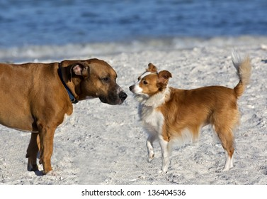 Sheltie Collie Papillon and Basset Boxer mixed breed dogs