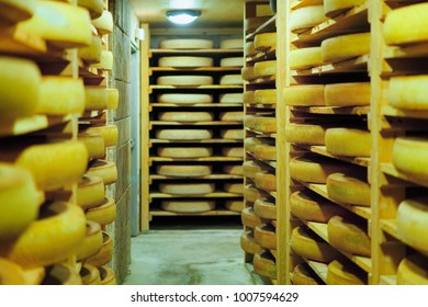 Shelves of aging Cheese on wooden shelves at maturing cellar in France, Franche Comte dairy
