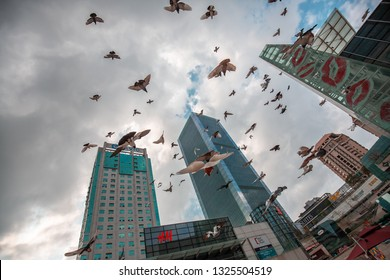 Shenzhen, China - Feb 21, 2019: Pigeons fly on NineSquare shopping mall in Shenzhen, people get to interact  with pigeons.