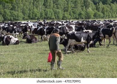 shepherd belarus