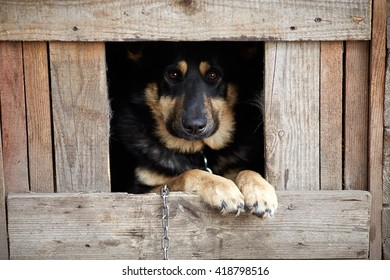 Shepherd dog in the booth