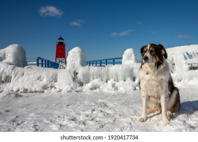 Shepherd dog in front of frozen Charlevoix ighthouse