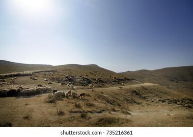 shepherd drives on the mountain route an attara of sheep, the desert mountain area, Azerbaijan mountain field