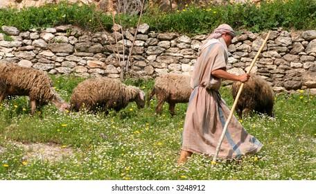 Shepherd and Flock in Israel
