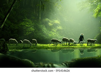 a shepherd and a flock of sheep on the edge of a lake with a backdrop of a misty forest in the morning