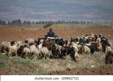 Shepherd and goat herder, Beeka Valley, Lebanon, Middle East