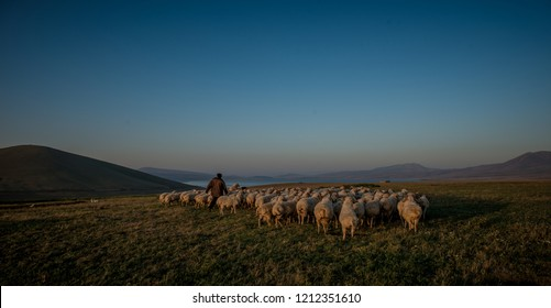 shepherd herding his flock of sheep at sunset over the fields of eastern europe