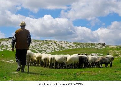 Shepherd with his sheep on pasture