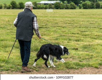 A shepherd and his sheepdog entered the field to herd sheep in a sheepdog trial.