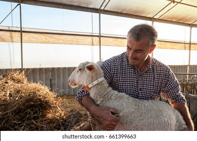 Shepherd with lamb in the sheepfold
