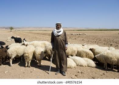 Shepherd with livestock, Mardin Turkey, September 2015.