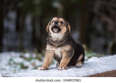 Shepherd puppy sitting on a snow bench