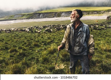 Shepherd With Sheep On The Field In Mountains, Front View. Agriculture Concept