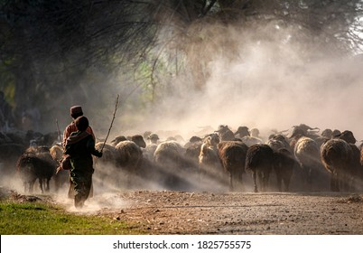 shepherds with flock of sheep in dust and light , nomadic life of shepherds from rural areas of Baluchistan Pakistan