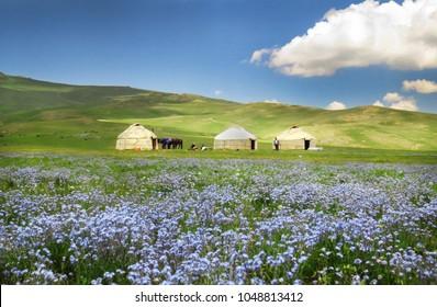 Shepherds tent Yurt with blue flowers, Kyrgyzstan mountain scenery
