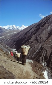 Sherpa porters carry loads in the Gokyo valley,Khumbu Himalaya,Nepal, Asia