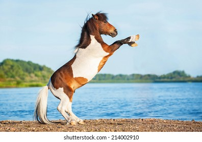 Circus Pony Images, Stock Photos & Vectors | Shutterstock