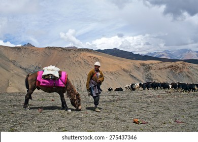 SHEY LA, NEPAL - SEPTEMBER 5: Tibetan nomad with yaks walking across Shey La pass on September 5, 2011 in the Nepal Himalaya