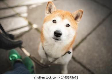 Imagenes Fotos De Stock Y Vectores Sobre Dog Drinking