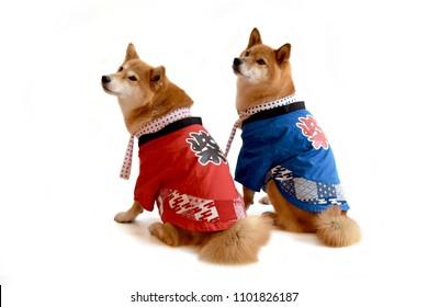 "shiba inu happi coat Translation: ""shiba"""