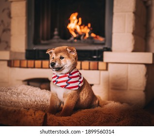Shiba Inu puppies are warming themselves by the fireplace with fire. home comfort cute puppies